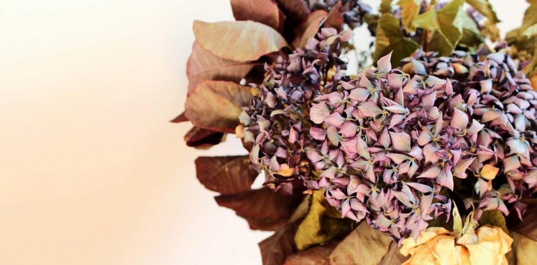 Secar Flores Frescas Para Decorar Tu Hogar - Decorar-con-flores-secas